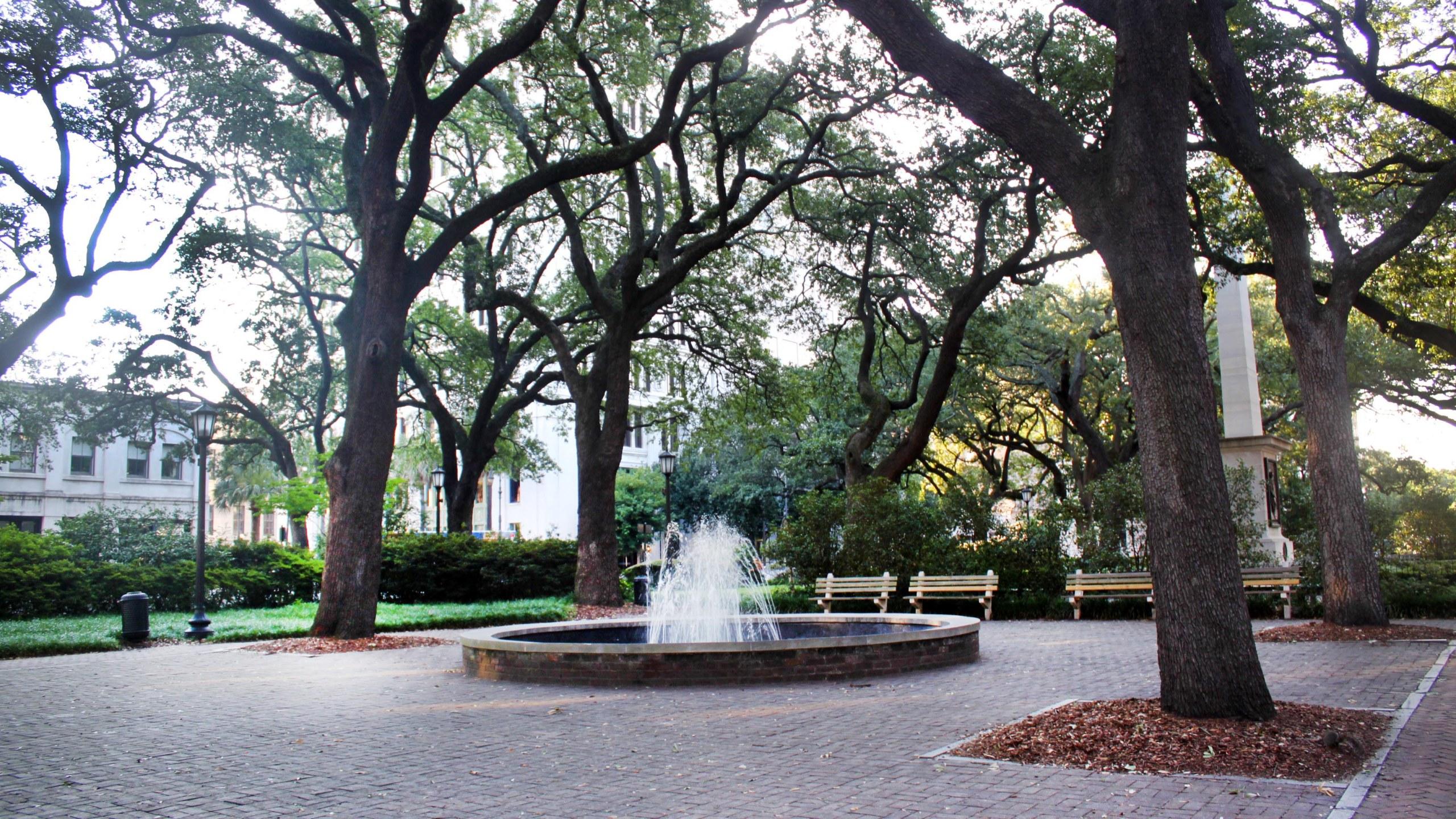 WSAV Investigates Savannah's Squares Gathering No Spanish Moss