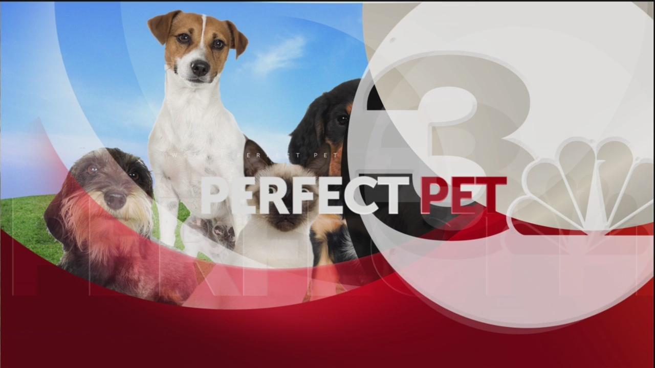 Perfect pet_69433