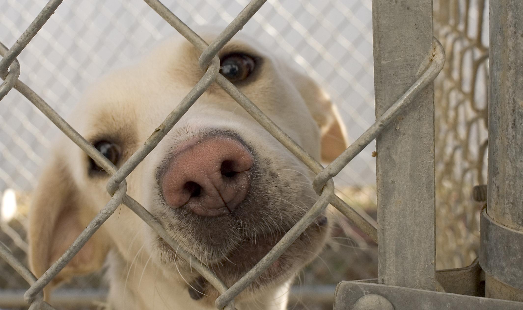 Dog_in_animal_shelter_in_Washington,_Iowa_114351