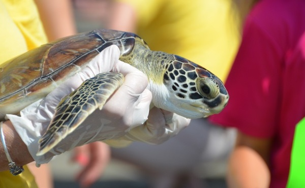 sea turtles_133063