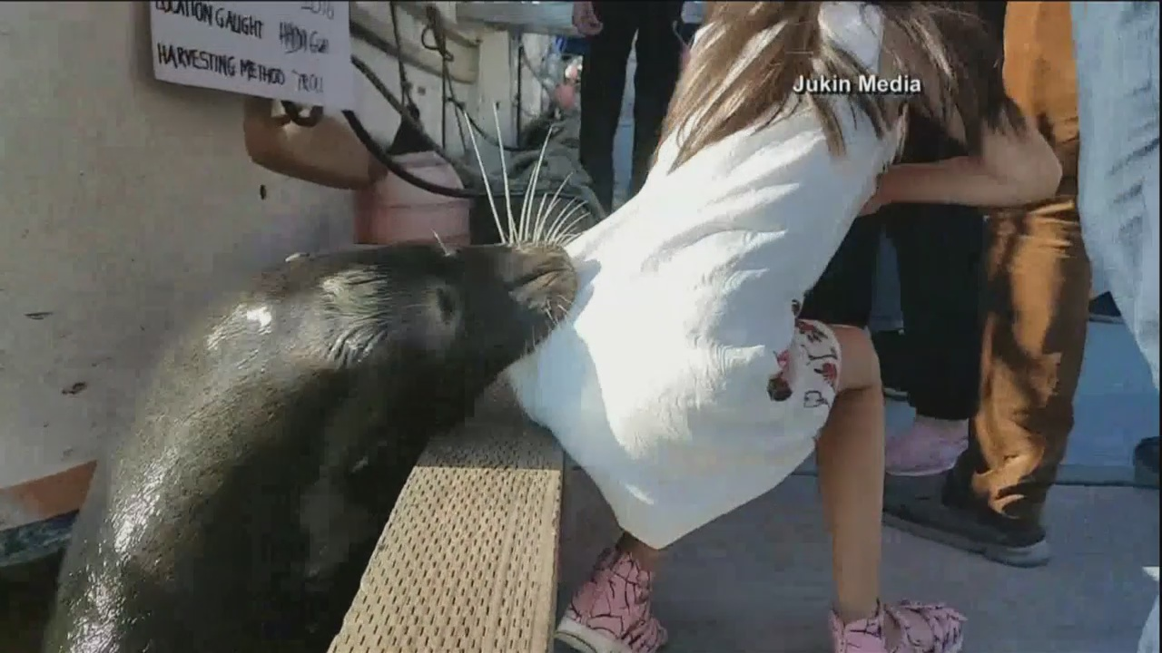 sea lion grabs girl_245125