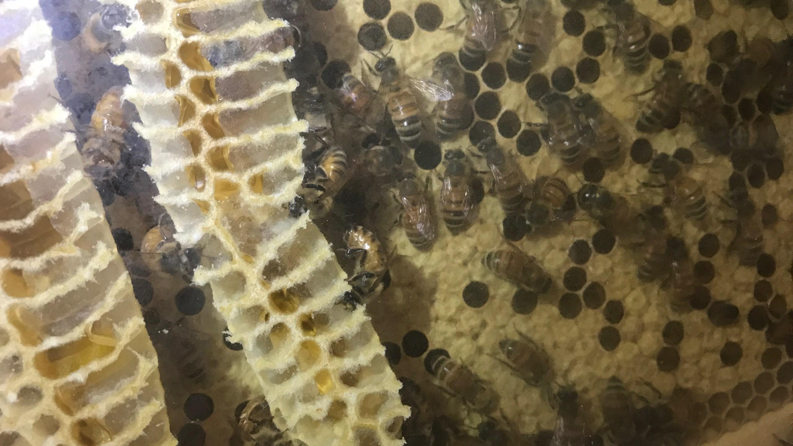 Tybee bees_260191