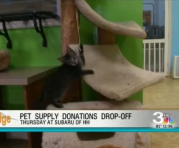 clear the shelters_281999