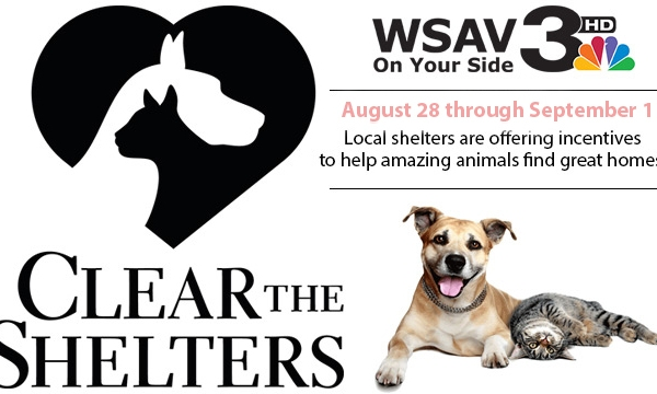 cleartheshelters_284191