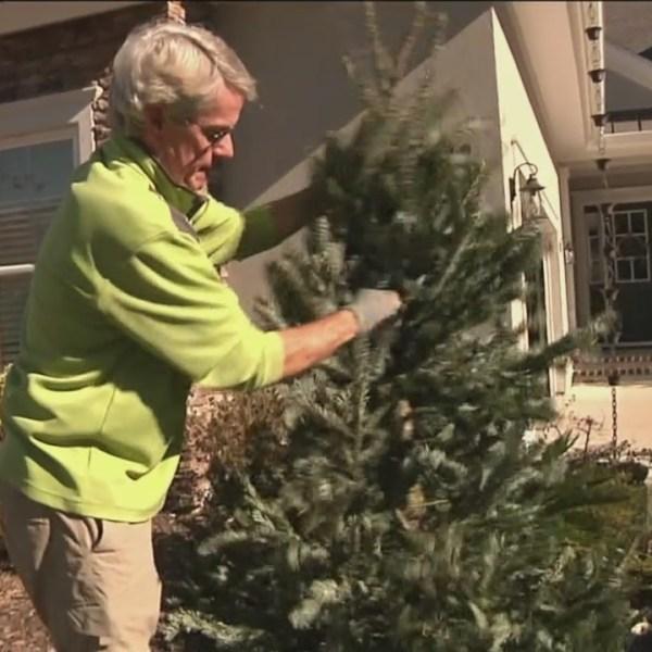 christmas tree_333994