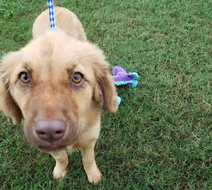 phoenix puppy savannah animal care_327939