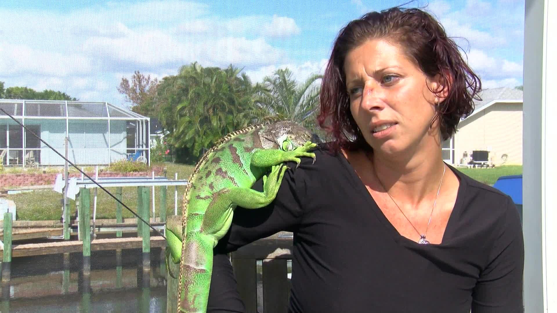 iguana attack_337709