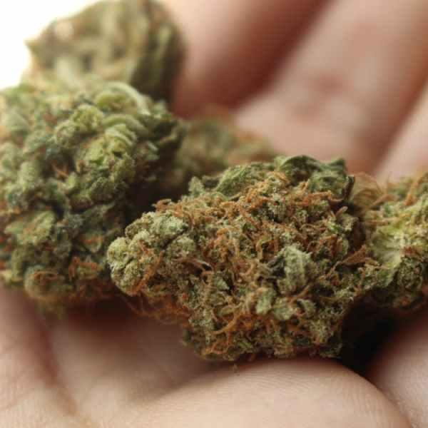 marijuana generic_338132