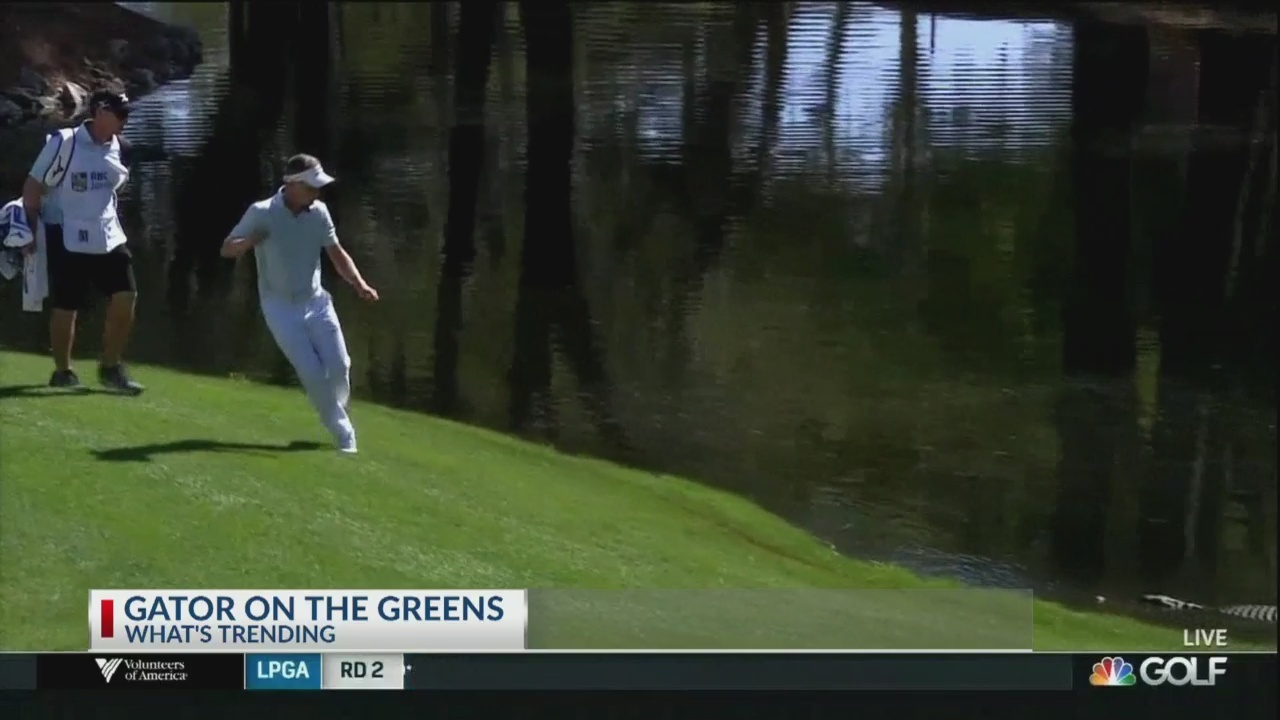 Gator_surprises_RBC_Heritage_golfer_0_20180413222158