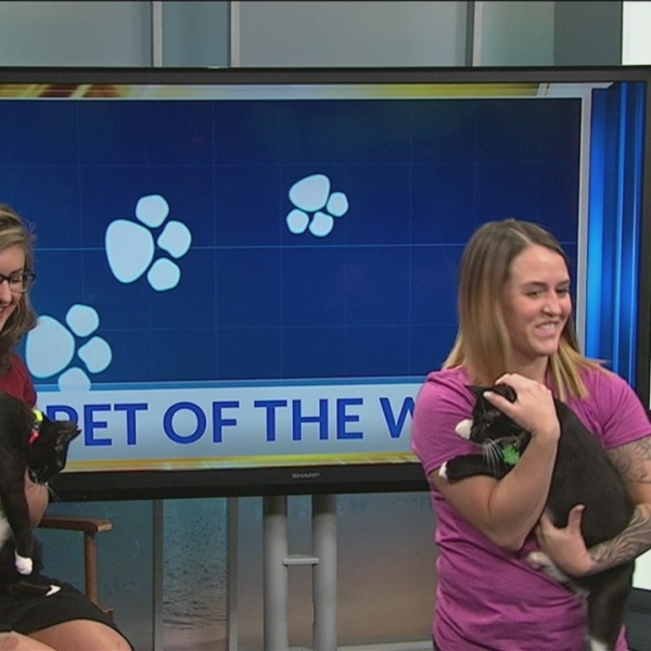 Pet of the Week: Gamble and Lyle