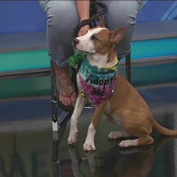 Pet of the Week: Cottontail