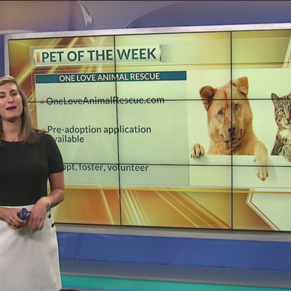 Pet of the Week: Anne Bonny