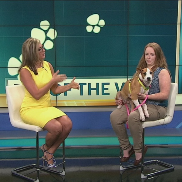 Pet of the Week: Cottontail Returns