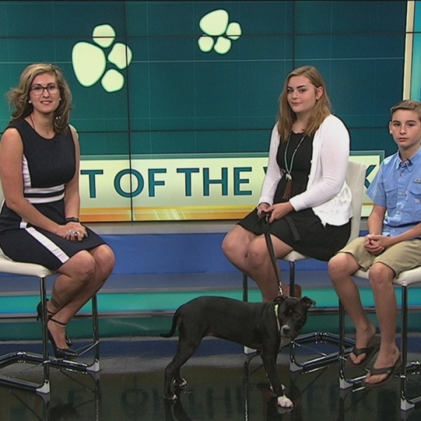 Pet of the Week: Nestle