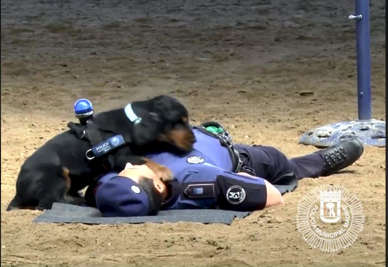 police dog does CPR_1530011793815.JPG.jpg