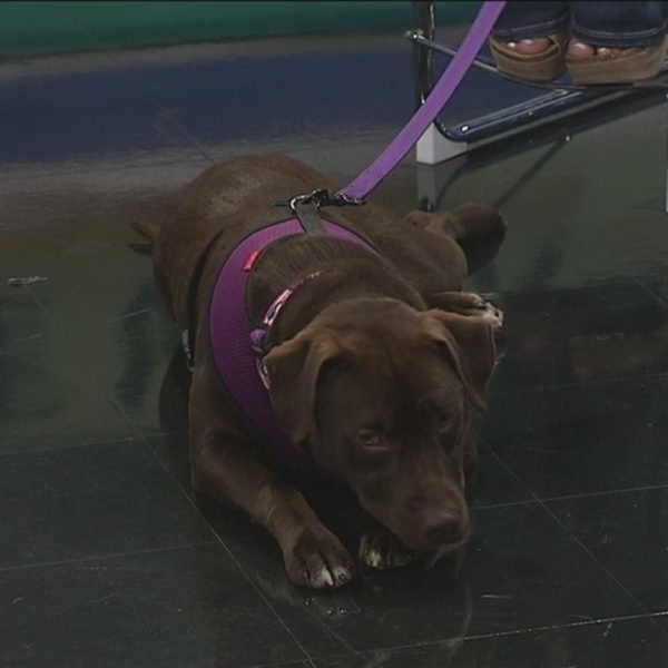 Pet of the Week: Skye