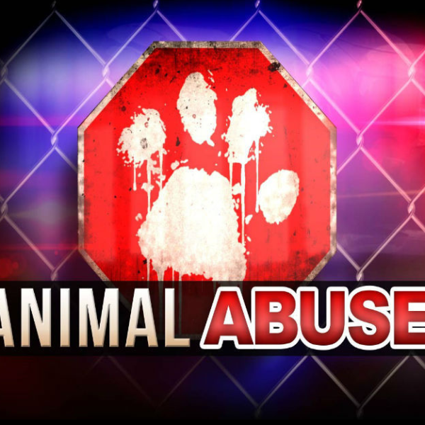 Animal abuse investigation