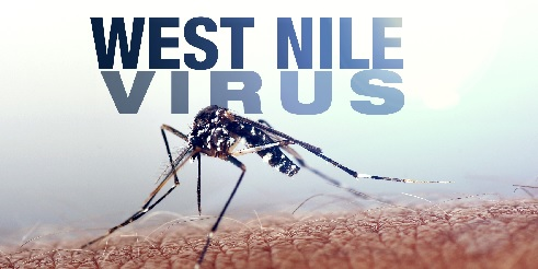 West Nile Virus_30047