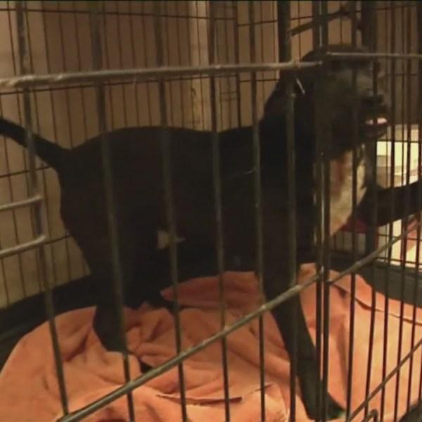 JARM free pet adoptions