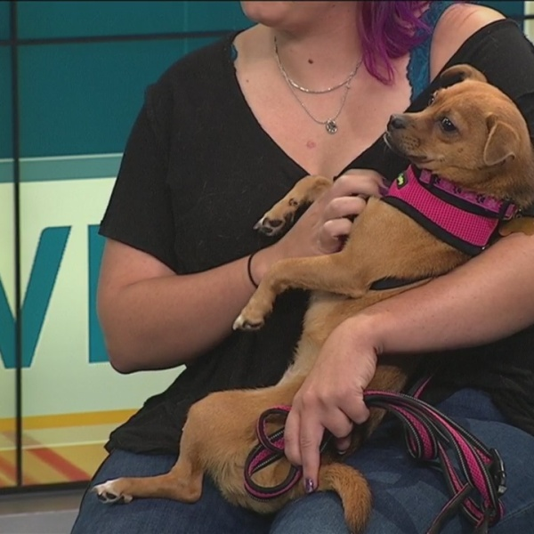 Pet of the Week: Joy