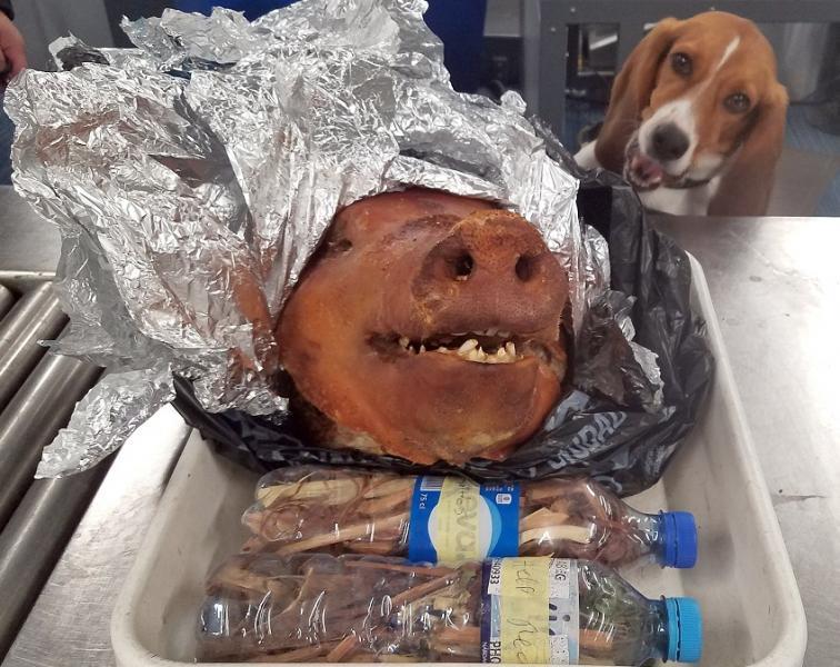 Hardy and pig at ATL airport_1539689126955.jpg.jpg