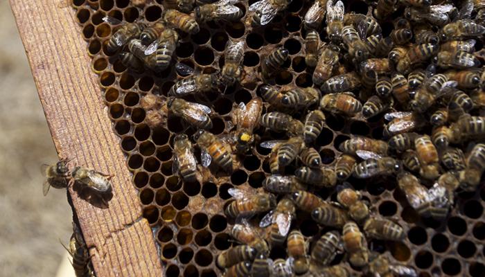 bees honey_1540230284216.png.jpg