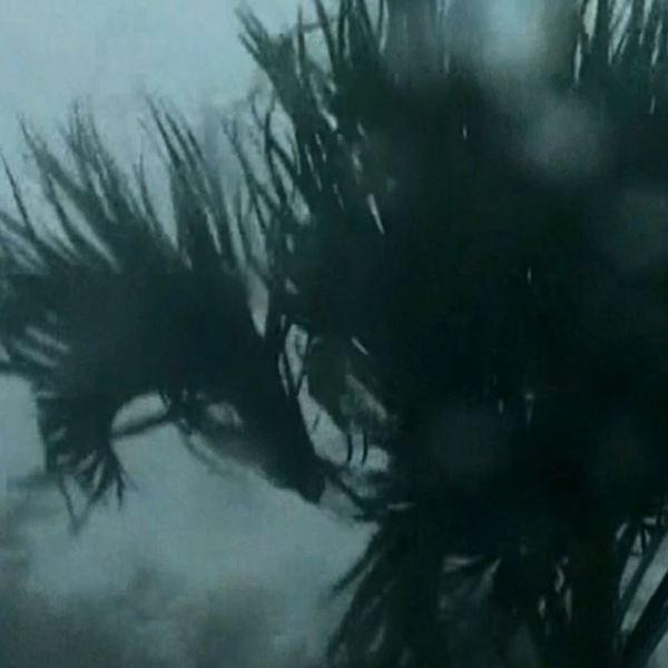 michael storm_1539213932748.JPG.jpg