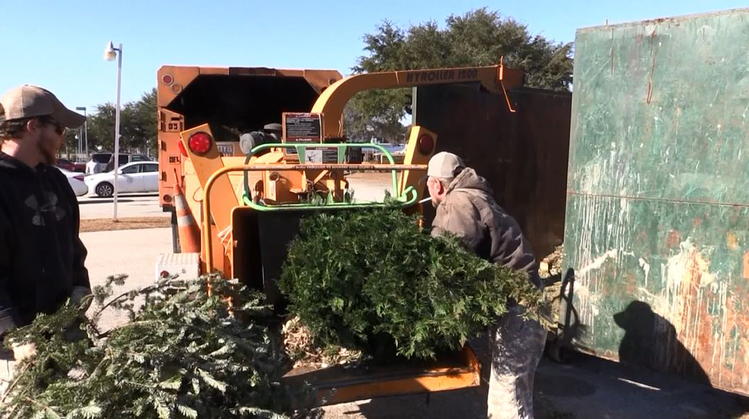 ONE FOR THE CHIPPER - CHRISTMAS TREE_1545857787498.JPG.jpg