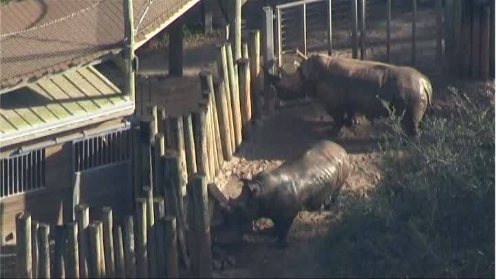 Rhino_injures_girl_at_Florida_zoo_0_20190102115849