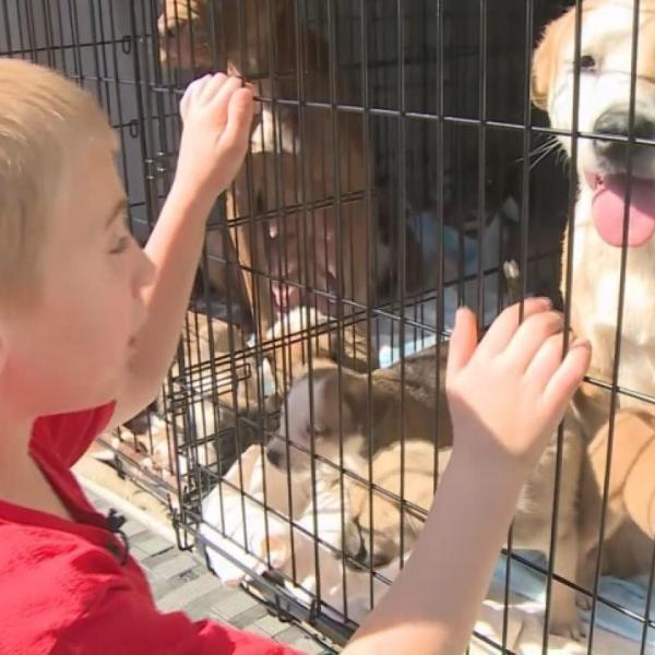 Georgia boy helps save more than 1,000 dogs