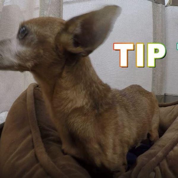 Meet Tip Tip!