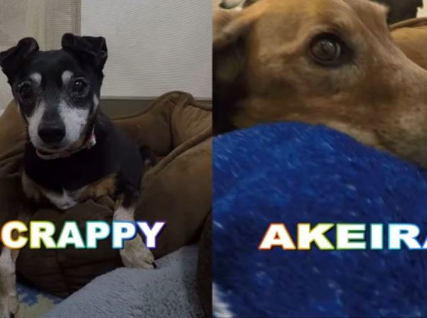 Meet Scrappy and Akeira