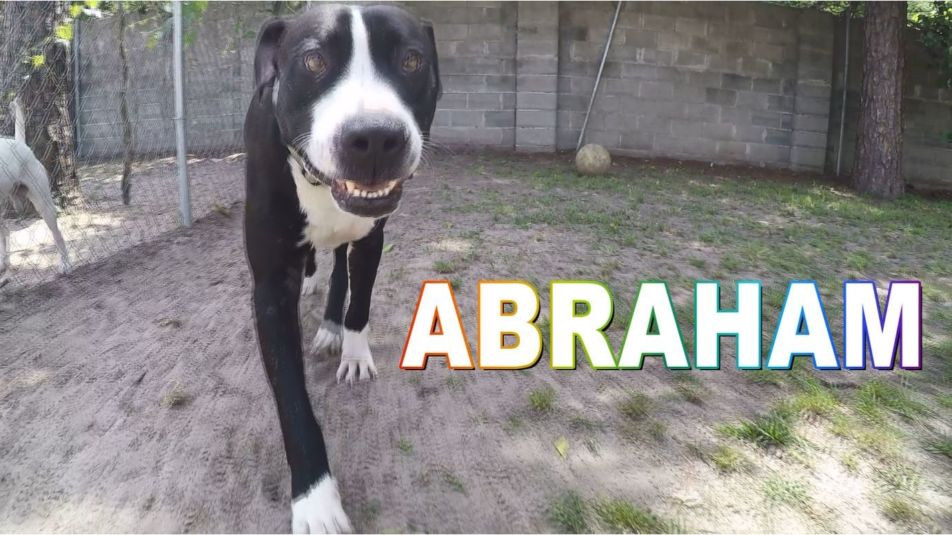 Abraham up for adoption