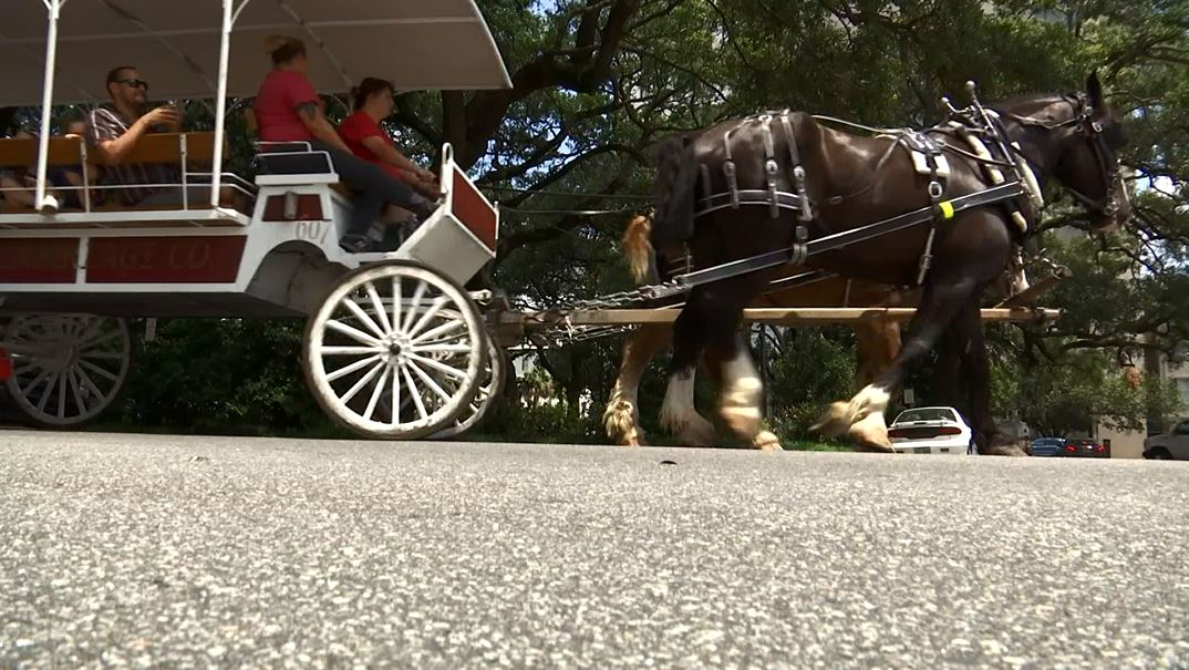 horse carriage 1_355144