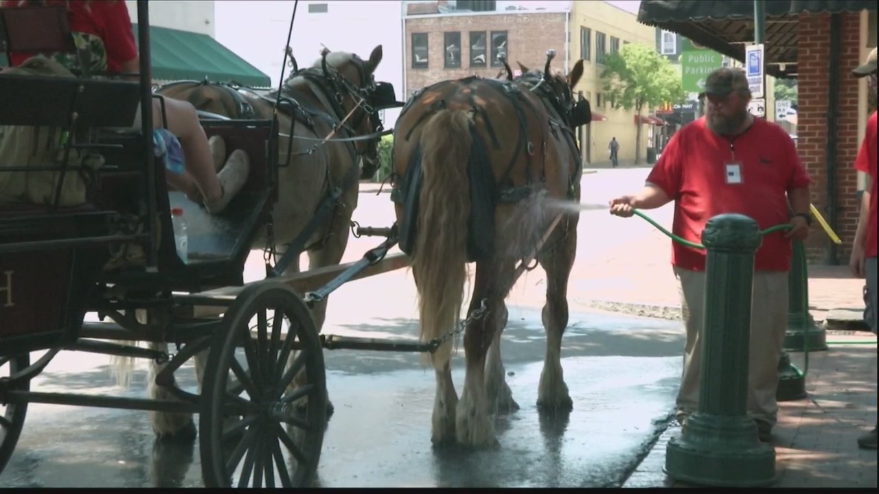 City suspends horse drawn carriage tours due to heat