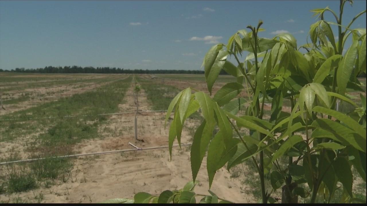 Local pecan farmers feeling brunt of trade war