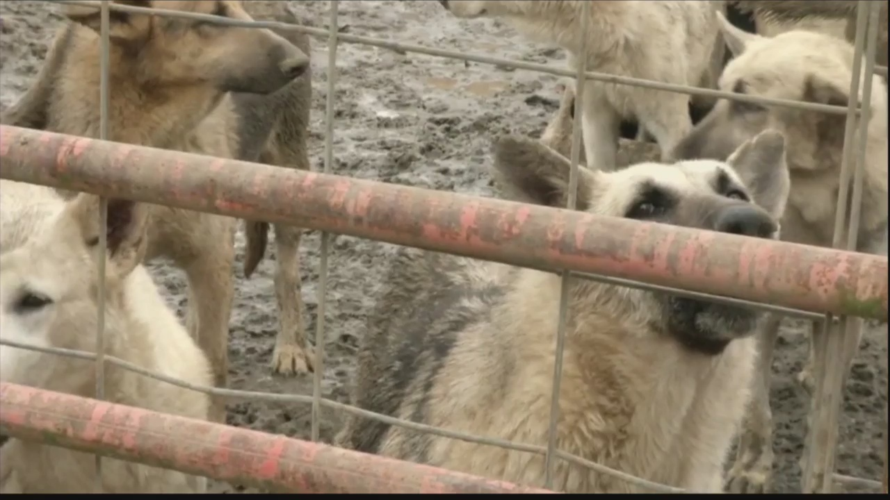 Woman accused of running puppy mill in Montgomery and Candler Co. files intent to sue