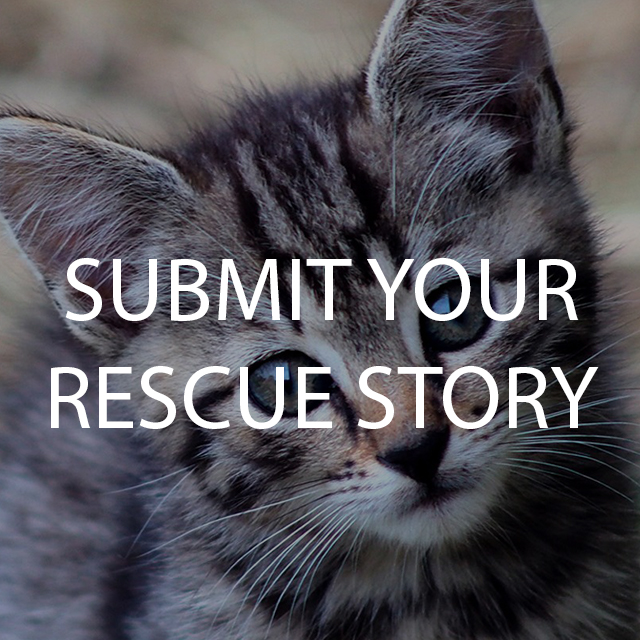 Submit Rescue Story