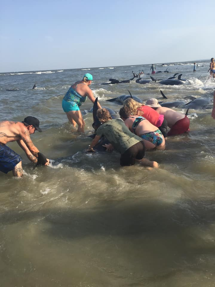 Whales Beached On St Simons Island
