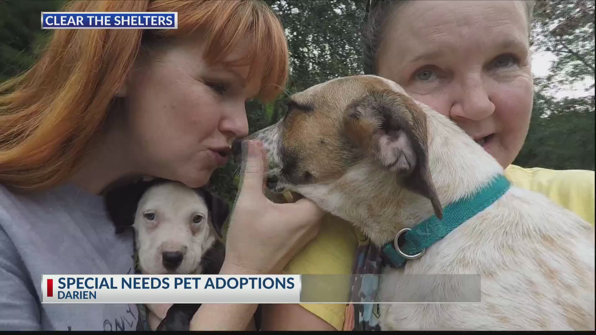 Local pet rescue won't cast away special needs animals | WSAV-TV