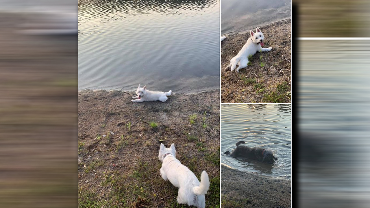 3 dogs die hours after being exposed to toxic blue-green algae while