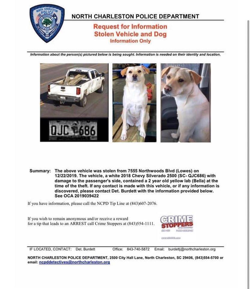 Man offers $10K for safe return of stolen dog named Bella ...