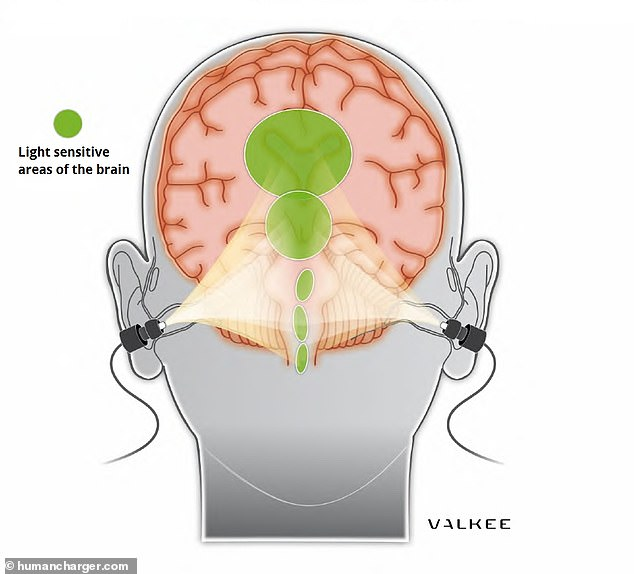 human charger effect on brain